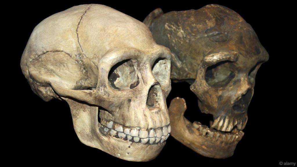 new_human_skull