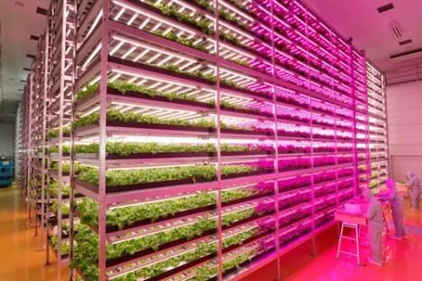 indoor-factory-lettuce-farm-468x311