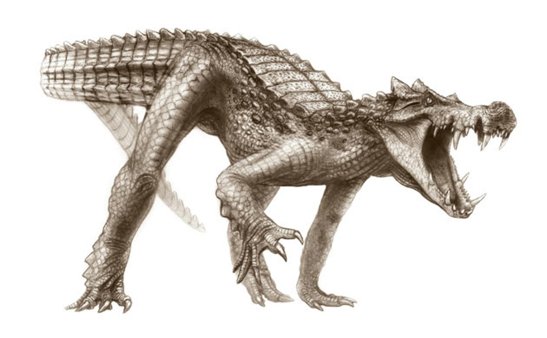 Cretaceous-Crocodyliforms-010