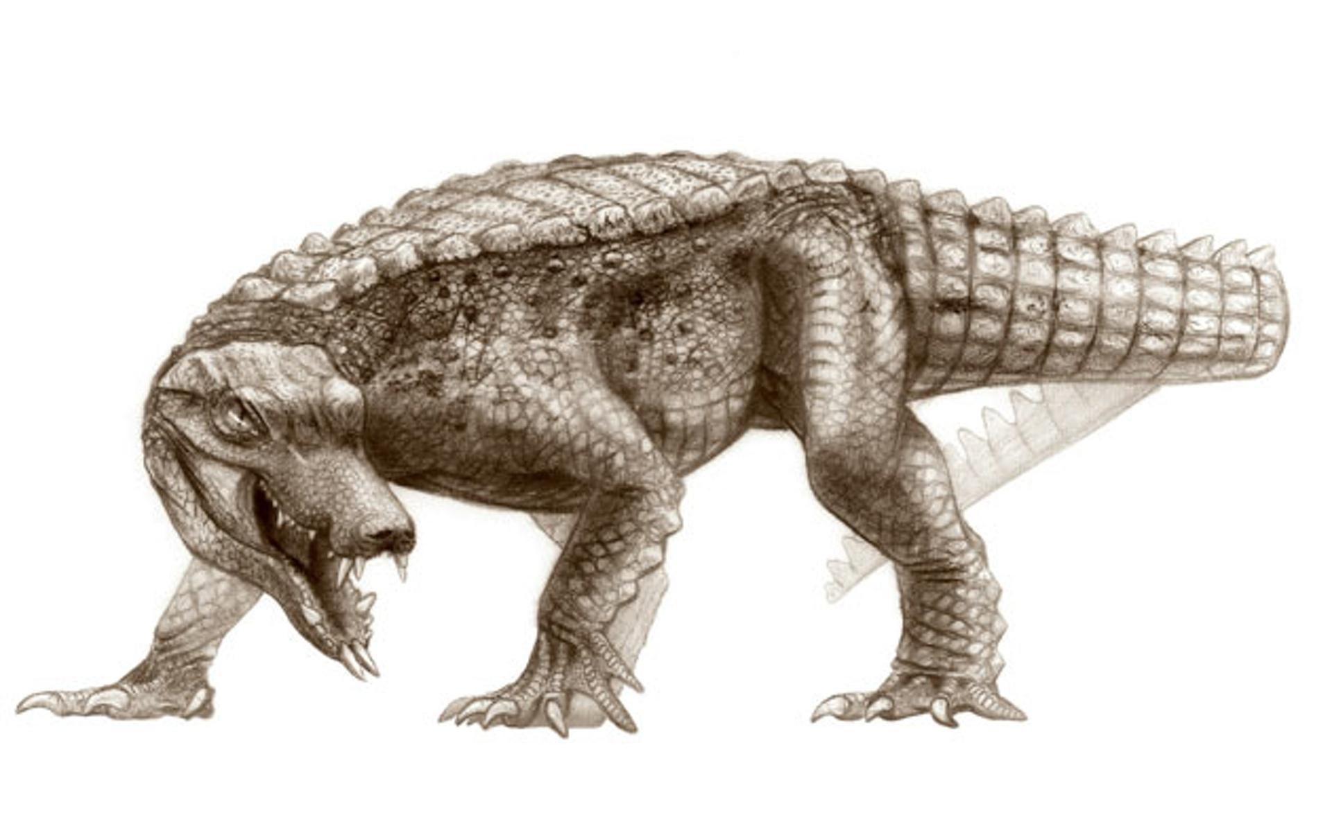 Cretaceous-Crocodyliforms-011