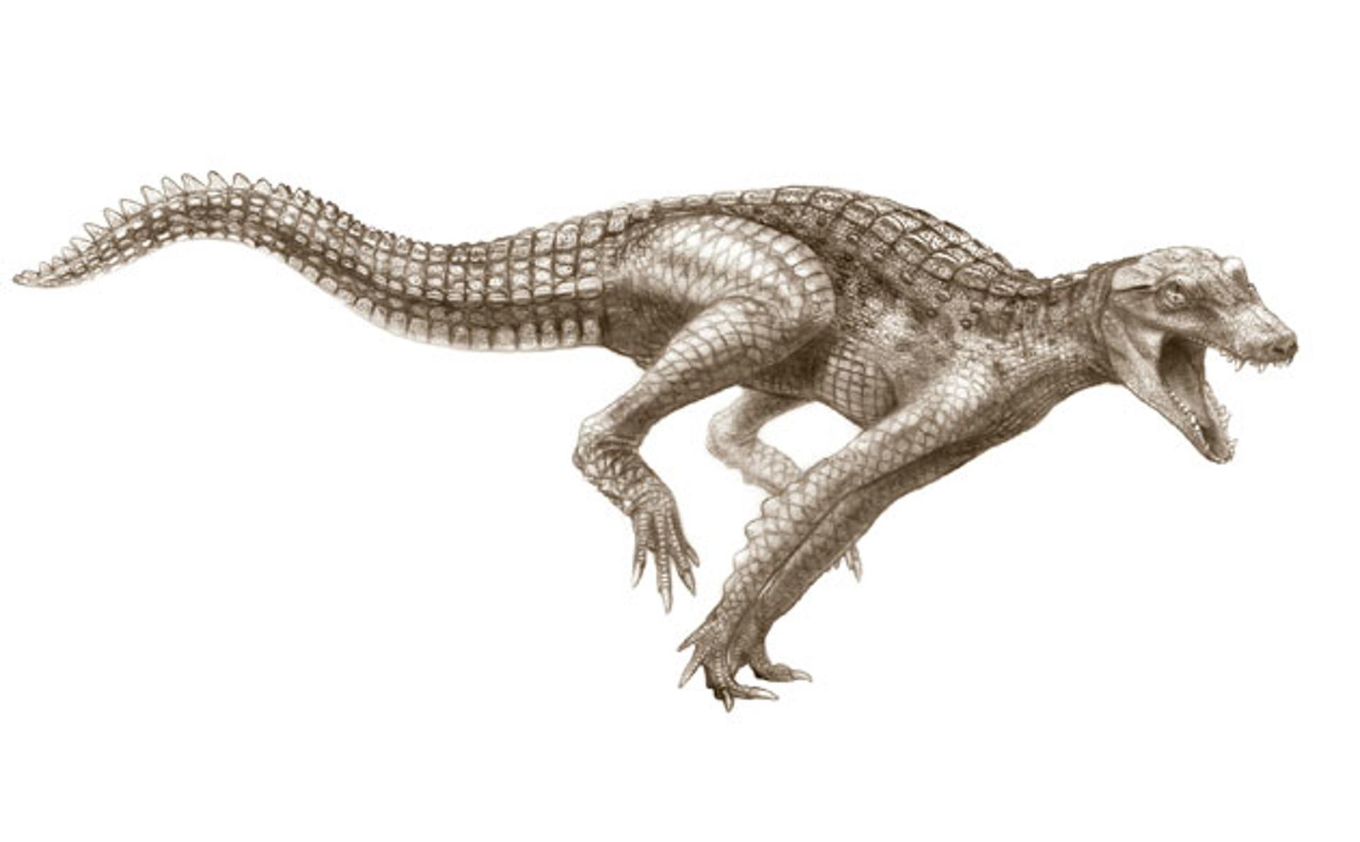 Cretaceous-Crocodyliforms-012