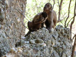 monkeysarese